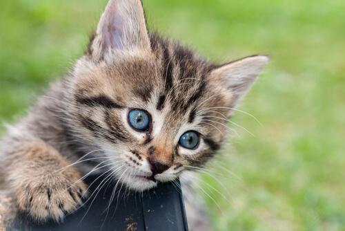 Tratamiento de los cálculos renales en gatos