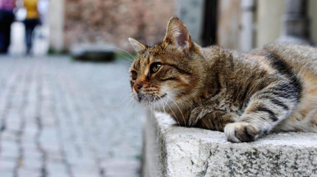 Tratamiento del estrabismo en gatos