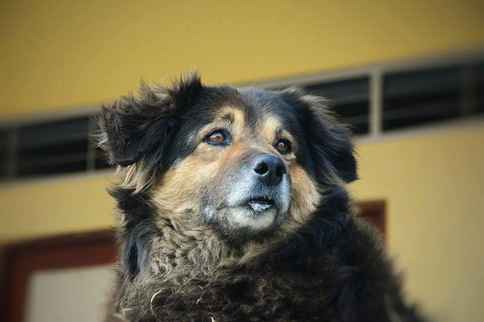 Tratamiento y cuidados de la demencia senil en perros