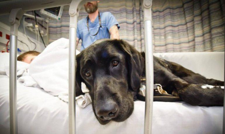 Un hospital de Madrid permite a los perros visitar a niños ingresados