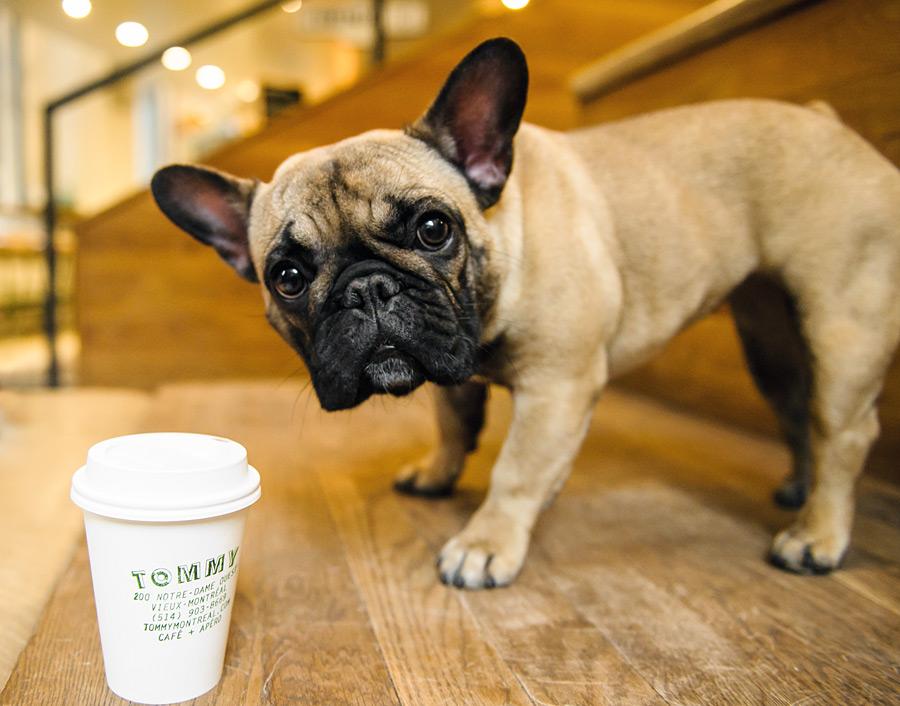 1. Un café con nuestra mascota