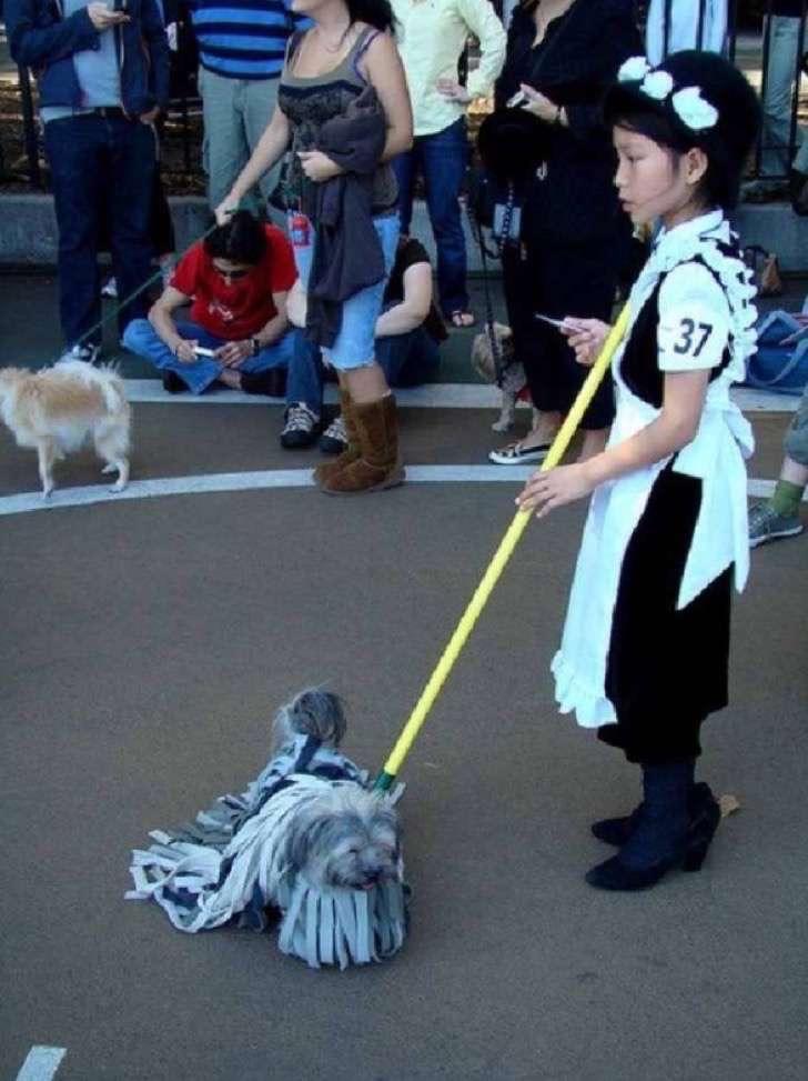 4. El increíble perro mopa