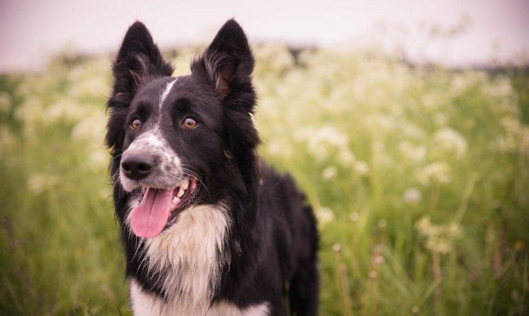 5 cosas que pedimos por el Día Mundial de los Animales