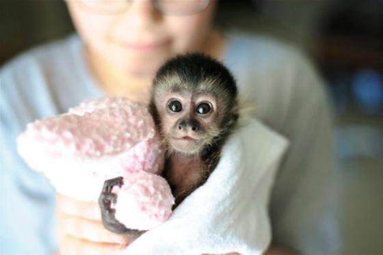 5. No más animales exóticos fuera de su hábitat natural