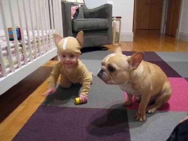 7. Disfraz de perro