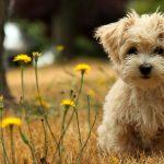 8 cosas que hace tu perro para llamar tu atención