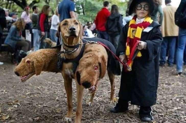 9. Harry Potter nunca pasará de moda