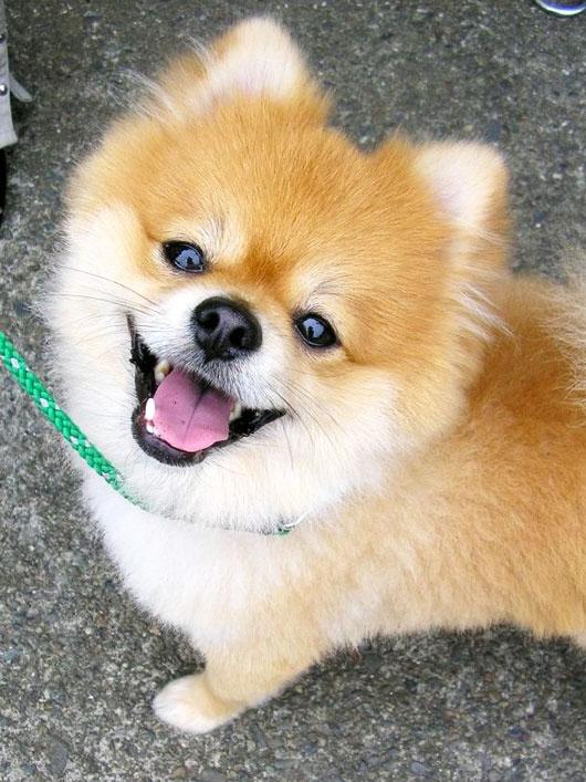 A qué edad castrar a un perro