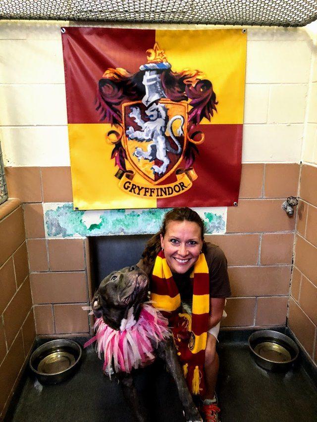 Adopta un perro según tu Casa de Hogwarts