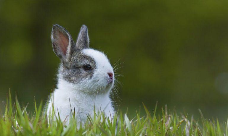 Alimentación de los conejos en cada etapa de su vida