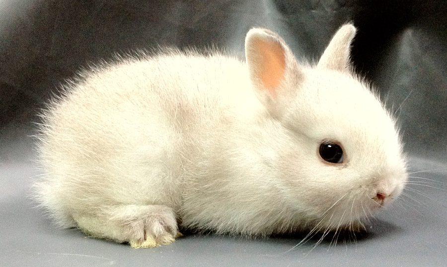 Alimentación del conejo toy