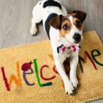 Bares y restaurantes dog friendly en Madrid