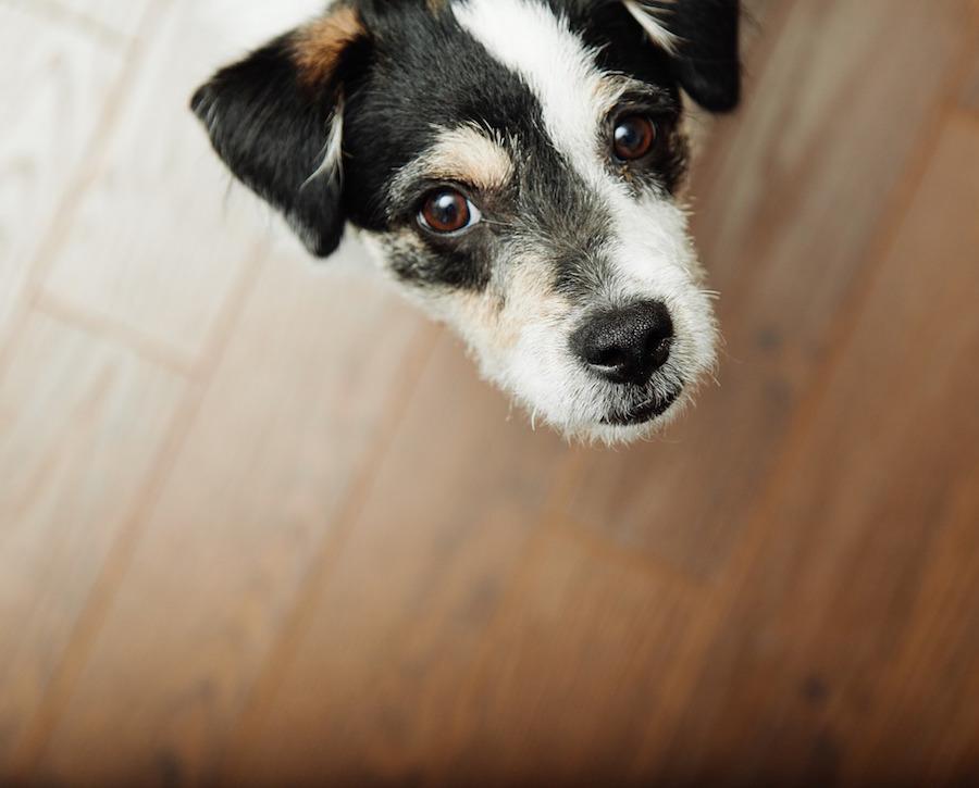 Bares y restaurantes dog friendly en Madrid