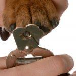 Cómo cortarle las uñas a un perro
