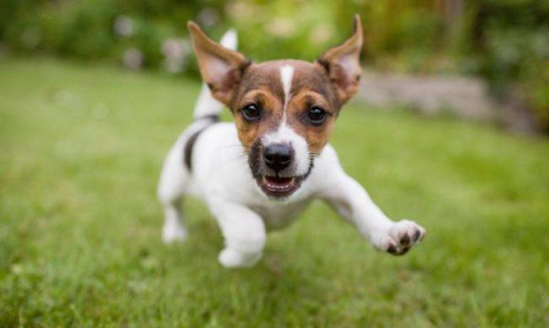 Cómo cuidar los dientes de un perro