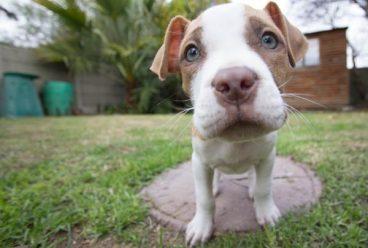 Cómo educar a un cachorro para que no muerda