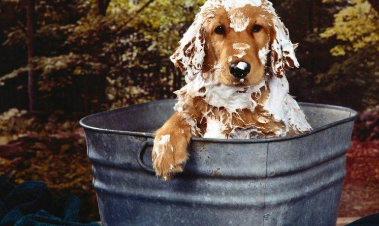 Cómo hacer un baño de avena para perros