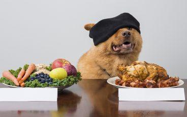 Cómo mejora la salud de nuestra mascota con la dieta BARF para perros