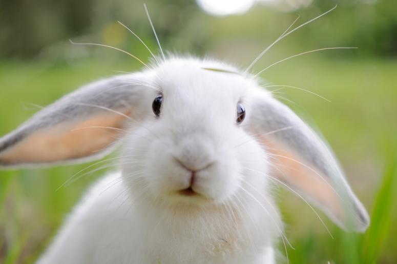 Causas por las que mi conejo tiene diarrea