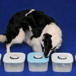 Conoce a los perros que detectan la epilepsia