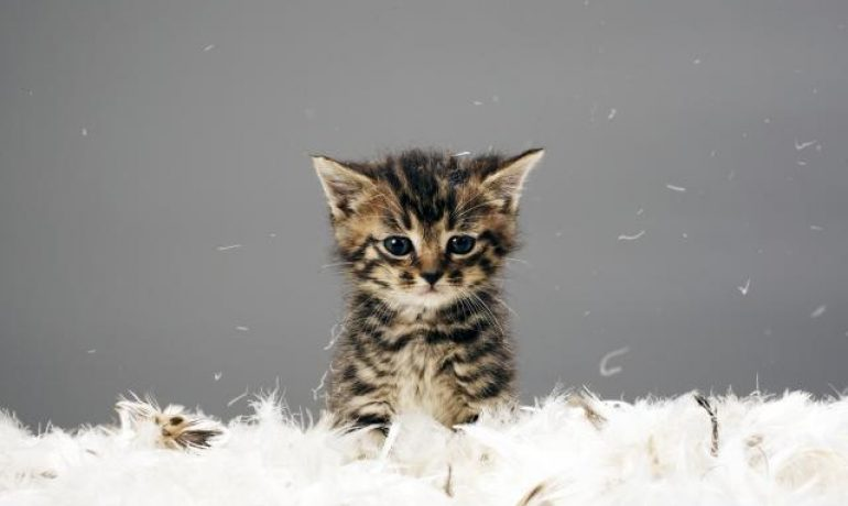 Consejos clave para adiestrar a un gato