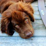 Consejos para acabar con la gingivitis en perros