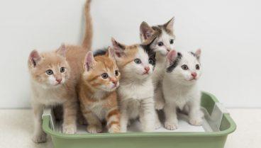 Consejos para el adiestramiento para gatos