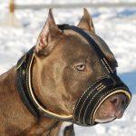 Consejos para elegir el mejor bozal para perros