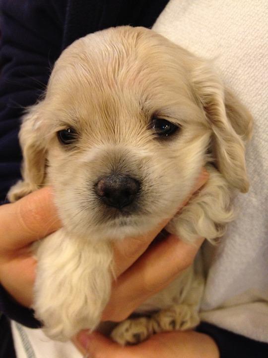 Cu ndo se puede separar a un cachorro de su madre desc brelo - Cuando se puede banar a un cachorro ...