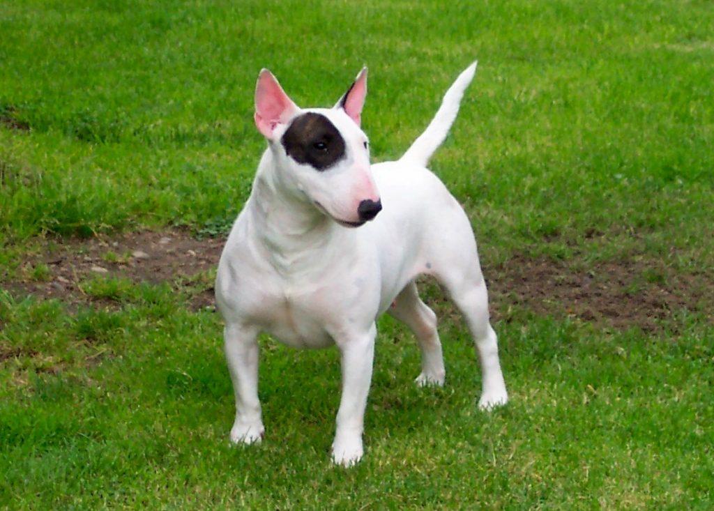 Cuidados en casa de un perro con hepatitis