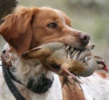 El Convenio Europeo de PROTECCIÓN ANIMAL