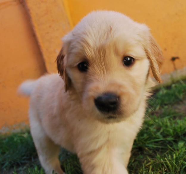Factores de riesgo a evitar durante el embarazo en perros