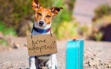 Feria de adopción de mascotas, este fin de semana en Madrid