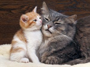 Guía completa para cuidar a los gatos mayores