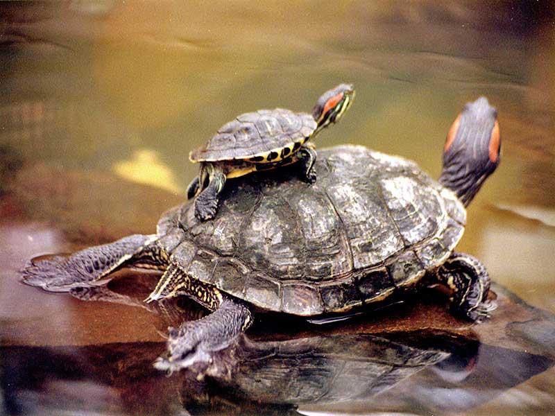 La alimentación de las tortugas