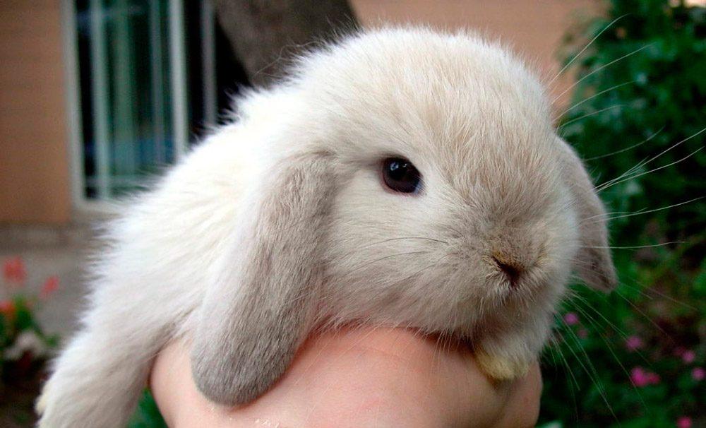 La alimentación de los conejos jóvenes