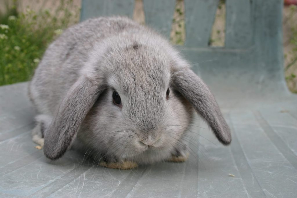 La alimentación de los conejos recién nacidos