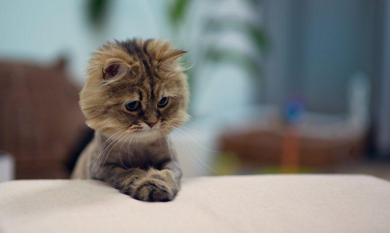 Las enfermedades de los gatos mayores más comunes