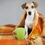 Las enfermedades respiratorias en perros más frecuentes
