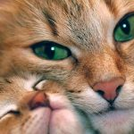 Los parásitos en gatos más frecuentes