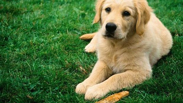Los parásitos internos en perros se pueden prevenir