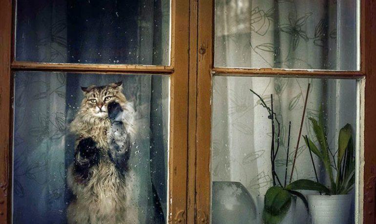 Mi gato se ha caído por la ventana