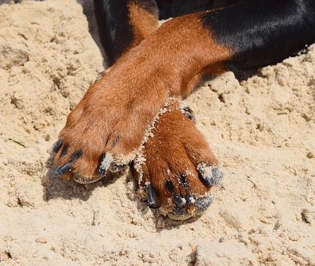 Mi perro se muerde las patas