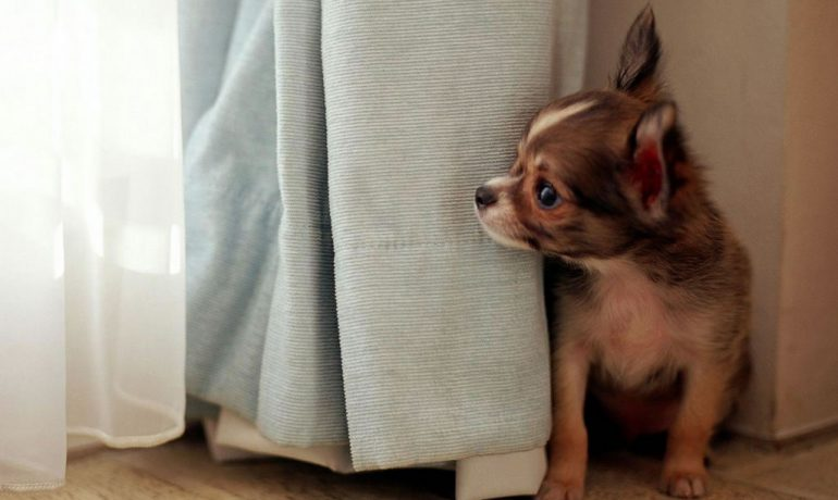 Mi perro tiene miedo a otros perros