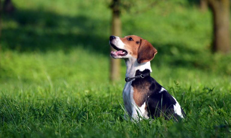 Nemátodos en perros