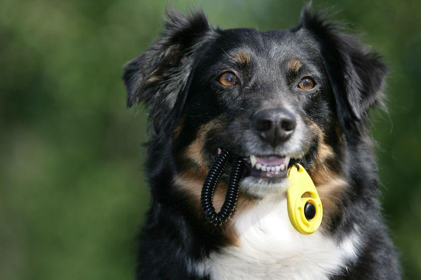 Para qué sirve el clicker para perros