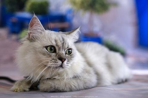 Prevención de la giardia en gatos