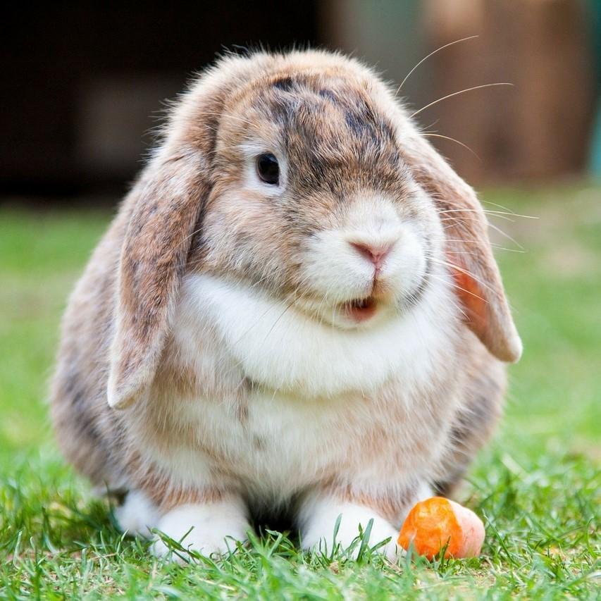 Qué es la dermatofitosis en conejos