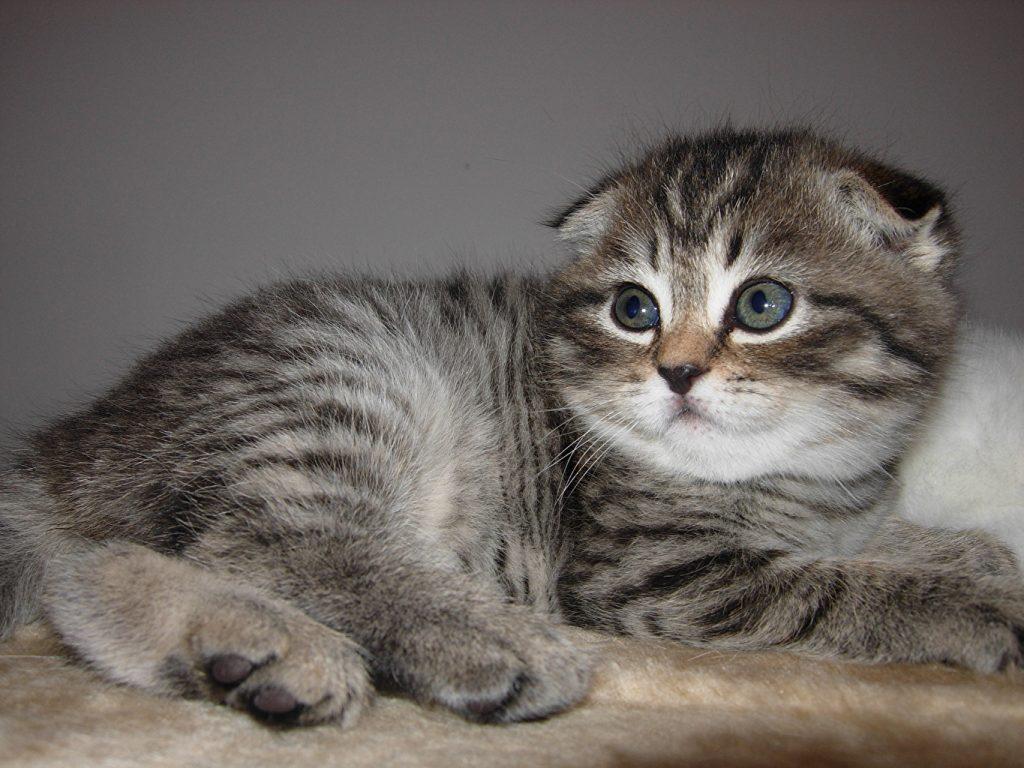 Qué hacer ante la diarrea crónica en gatos