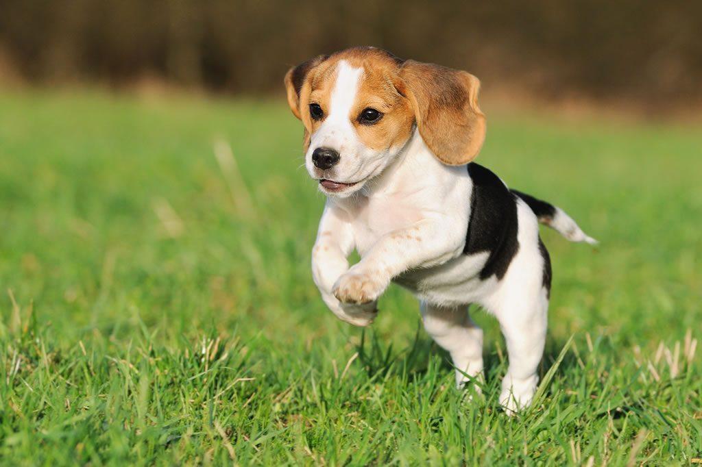 Qué hacer ante las convulsiones en perros